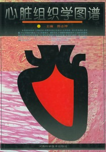 心脏组织学图谱