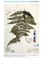 中国国家植物标本馆模式标本集.第1卷