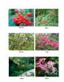 河南洛阳熊耳山省级自然保护区科学考察报告