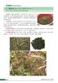 中国野菜野果的识别与利用·野菜卷