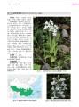 中国野生兰科植物原色图鉴(上、下卷)